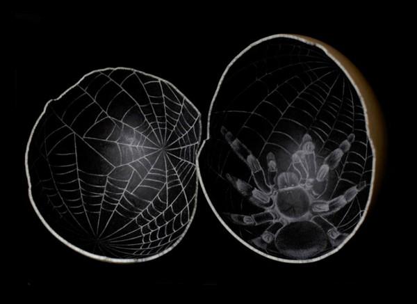 Scott-Campbell-Ostrich-Eggs-2-600x437